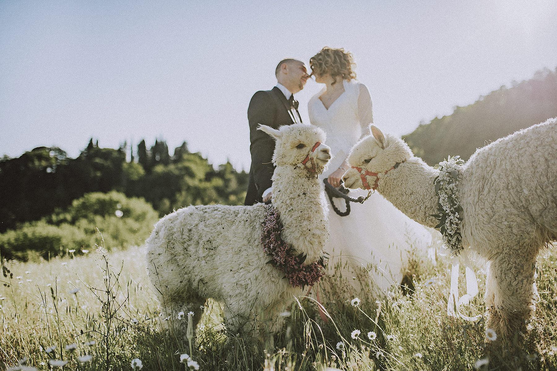 Servizio fotografico matrimonio Mugello con Alpaca